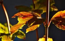 Текстура листьев падения Стоковое Фото