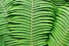 Текстура листьев папоротника зеленый цвет полета птиц предпосылки осени выходит лучам поворот солнца стоковая фотография
