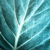 текстура листьев предпосылки зеленая Зеленая текстура макроса лист Стоковые Изображения RF