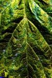 текстура листьев таинственная Стоковые Изображения RF