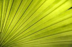 текстура листьев Стоковая Фотография