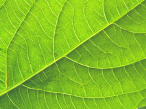 текстура листьев Стоковые Изображения