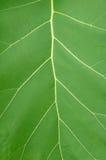 текстура листьев Стоковое Изображение RF