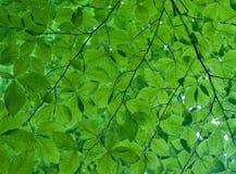текстура листьев Стоковые Фото