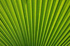 Текстура листьев Стоковые Фотографии RF