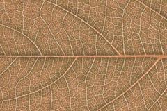 Текстура лист или предпосылка лист для дизайна Стоковые Фото