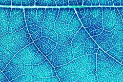 Текстура лист или предпосылка лист для дизайна Стоковое Фото