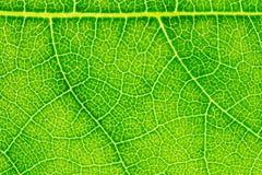 Текстура лист или предпосылка лист для шаблона вебсайта, красоты весны, окружающей среды и дизайна концепции экологичности Стоковое Фото