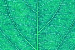 Текстура лист или предпосылка лист для шаблона вебсайта, красоты весны, окружающей среды и дизайна концепции экологичности Стоковая Фотография RF