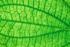 Текстура лист конца-вверх свежая зеленая стоковое фото rf