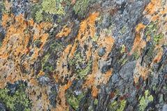 Текстура лишайника на камне Стоковая Фотография