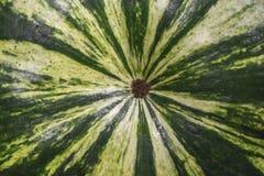 Текстура макроса арбуза Стоковые Фотографии RF