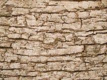 Текстура макроса - древесина - расшива вала Стоковая Фотография