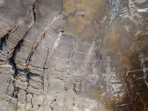 Текстура макроса древесины бронзы окаменелой стоковое изображение