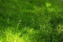 текстура макроса зеленого цвета травы предпосылки близкая вверх Травянистая поверхность зеленого цвета Стоковая Фотография