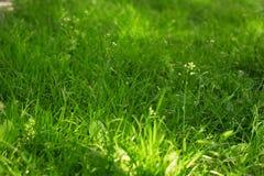 текстура макроса зеленого цвета травы предпосылки близкая вверх Травянистая поверхность зеленого цвета Стоковое Изображение RF
