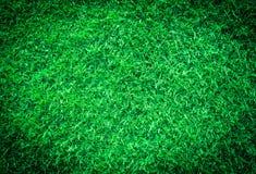 текстура макроса зеленого цвета травы предпосылки близкая вверх Стоковая Фотография