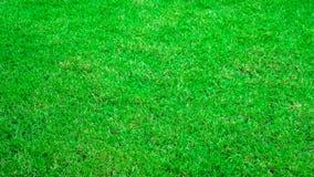 текстура макроса зеленого цвета травы предпосылки близкая вверх Стоковое Изображение RF