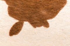 Текстура макроса коричневого меха коровы Стоковая Фотография RF