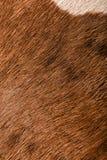Текстура макроса меха коровы Стоковые Фото