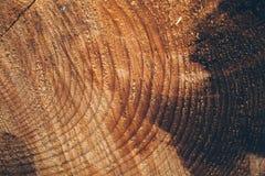 Текстура макроса отрезанного ствола дерева Пень сосны деревянные текстура и предпосылка для дизайна Органические текстуры Стоковое фото RF