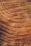 Текстура макроса отрезанного ствола дерева Пень сосны деревянные текстура и предпосылка для дизайна Органические текстуры Стоковые Изображения