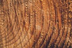Текстура макроса отрезанного ствола дерева Пень сосны деревянные текстура и предпосылка для дизайна Органические текстуры Стоковые Фото