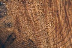 Текстура макроса отрезанного ствола дерева Пень сосны деревянные текстура и предпосылка для дизайна Органические текстуры Стоковые Фотографии RF