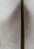 текстура макроса пера Стоковая Фотография