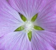 Текстура макроса цвета аметиста цветка поле глубины отмелое Стоковое Изображение