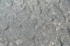 Текстура малых вулканических пород серого цвета Стоковая Фотография RF