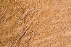 Текстура меха коровы (кожи) Стоковое фото RF