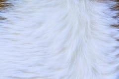 Текстура меха коровы (кожи) Стоковые Фотографии RF