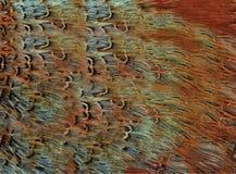 Текстура меха птицы Стоковое Фото