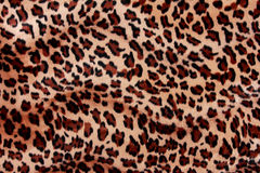 Текстура меха тигра Стоковое Изображение RF