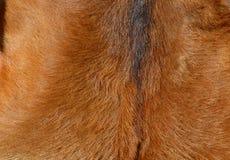 Текстура меха шкуры коричневая Стоковое Изображение