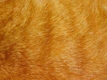Текстура меха Стоковая Фотография RF