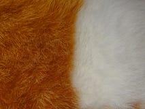 Текстура меха Стоковое фото RF