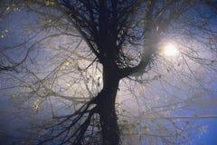 Текстура мистических и фантазии завода зеленого цвета лист Стоковые Изображения