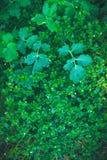 Текстура мистических и фантазии завода зеленого цвета лист Стоковые Изображения RF