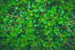 Текстура мистических и фантазии завода зеленого цвета лист Стоковое Фото