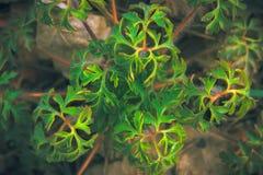 Текстура мистических и фантазии завода зеленого цвета лист Стоковая Фотография RF
