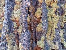Текстура: мох стоковое фото rf
