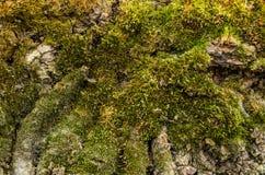Текстура МХА на дереве Стоковое Фото