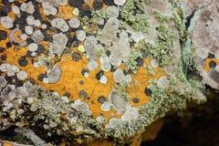 Текстура мха на старом камне Стоковая Фотография
