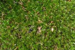 текстура мха предпосылки зеленая Стоковое Изображение RF