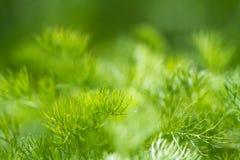 текстура мха предпосылки зеленая Стоковое Фото