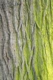текстура мха расшивы Стоковая Фотография RF