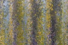 Текстура мха утеса предпосылки Стоковое Изображение