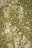 текстура настила цемента Стоковые Фотографии RF